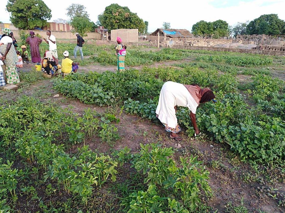 fassulo agricultura por riego ong senegal voluntarios