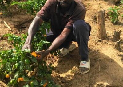 fassulo agricultura ong senegal voluntarios