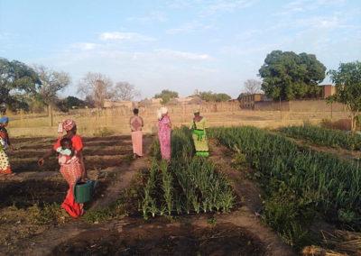 agricultura ong fassulo en el senegal
